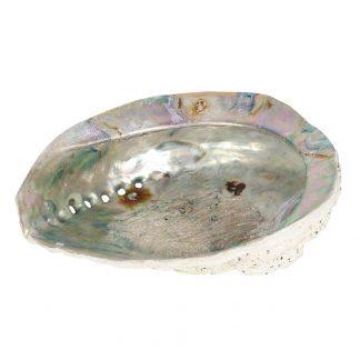 Abalone pärlikarp